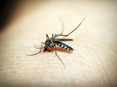Tips Agar Rumah Terhindar Nyamuk